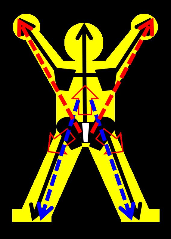 体の深層の開発は、骨のラインを意識する。