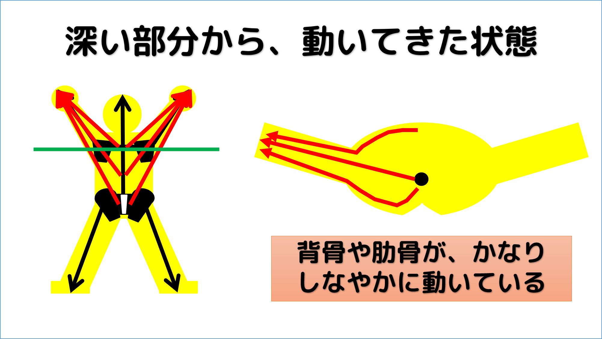 腕と体幹の連動性が出てくる様子を順を追って見ていく