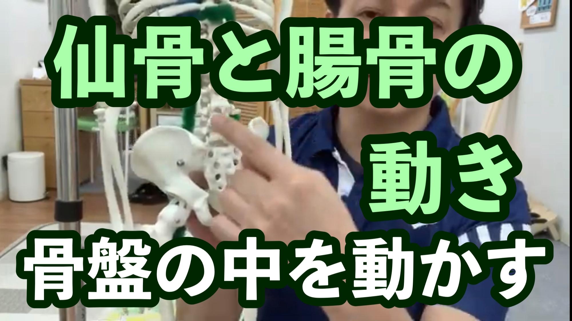 仙骨と腸骨の動き《骨盤の中を動かす》