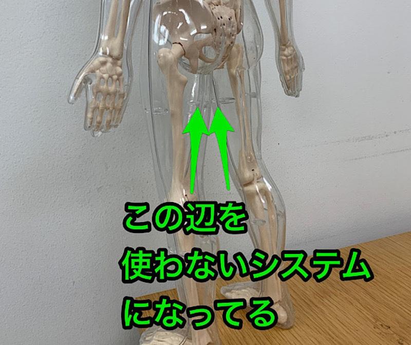 固まって動かない骨盤~使えてない内転筋を開発するトレーニング【動画エクササイズあり】